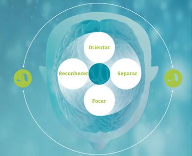 cerebro auditivo
